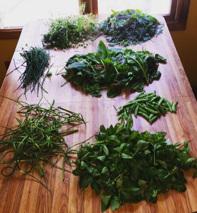 Harvesting Greens